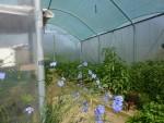 Les fleurs aident à la pollinisation des plants.