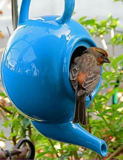 théière en nichoirs en oiseaux