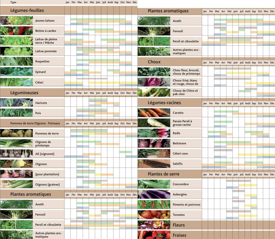 Que cultiver sous ma serre blog jardin couvert conseils jardinage et serres - Quel legume planter en juin ...