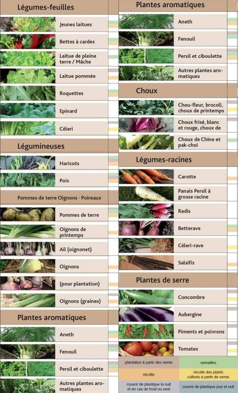 Calendrier de plantations en juillet