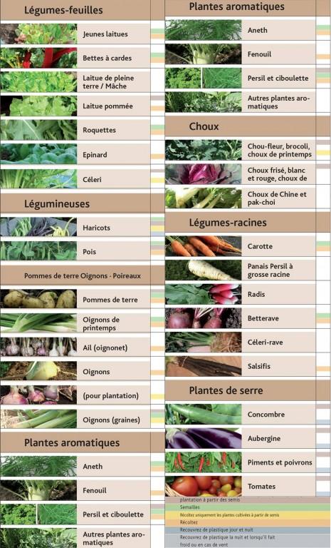 Que cultiver au potager au mois de juin blog jardin for Calendrier plantation jardin potager