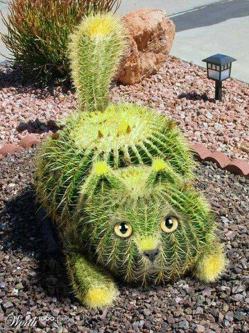 chat cactus