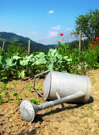 Un arrosoir au jardin