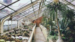 Serre pour cactus en hiver