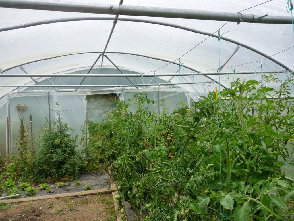 Serre angevine serre de jardin en photo un tunnel de largeur 6 m tres - Serre de jardin tunnel 9m2 ...