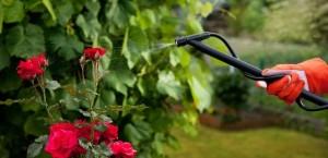 traitement jardin
