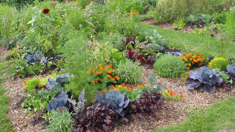 jardin en permaculture - Jardin Permaculture