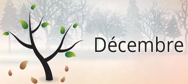 Potager mois par mois : décembre