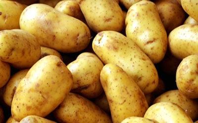 Histoire et évolution de la pomme de terre