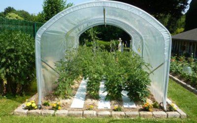 Photos de clients : la serre à tomates