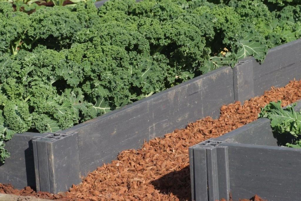 Carr s potager un produit recycl et cologique au jardin for Potager en bac