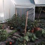 Serre Richelieu - Serre Richelieu - Culture de basilic, tomates, concombres, pastèque au fond à droite et un oiseau de paradis en colonie pour quelques jours.
