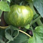 Produisez vos propres légumes sous votre serre de jardin