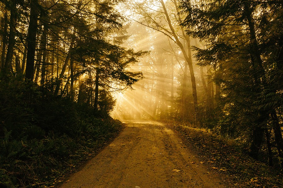 La forêt, un lieu apaisant