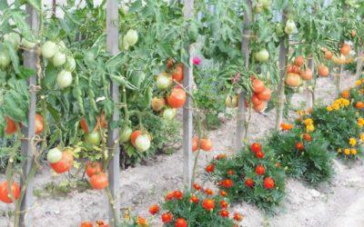 Abri à tomates : de nouvelles photos inspirantes