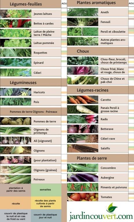 Calendrier de plantations en août