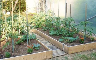 Pourquoi cultiver des tomates sous serre