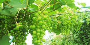 Les fruits et légumes qui poussent le mieux sous serre