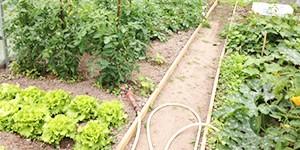 Serres de jardin : de nouvelles photos