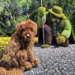 20 statues végétales magnifiques pour le plaisir des yeux