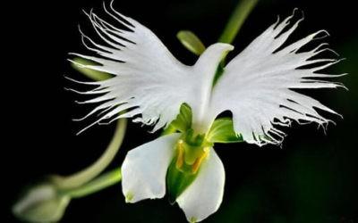 Des images de plantes avec des formes surprenantes