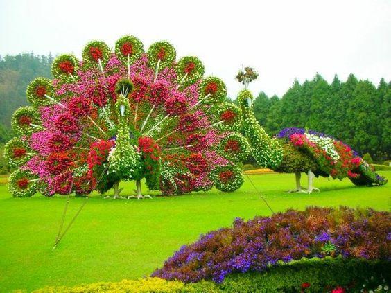 paon fleur
