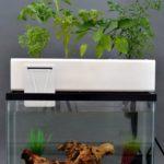 Cultiver des légumes bio grâce aux poissons avec l'aquaponie