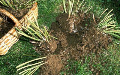 Quels sont les travaux de jardinage à faire en octobre  ?