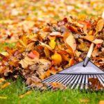 Comment réutiliser les feuilles mortes de son jardin ?
