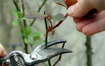 Quels sont les travaux de jardinage à faire en novembre ?