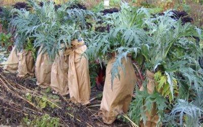Quels sont les travaux de jardinage à faire en décembre ?