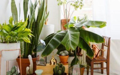Nos conseils pour rentrer vos plantes d'extérieur avant l'hiver