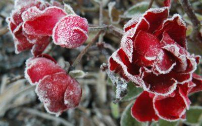 Les Cavaliers du froid et les Saints de Glace: La hantise des jardiniers