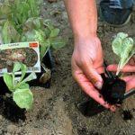 Quels sont les travaux de jardinage à faire en Mars ?