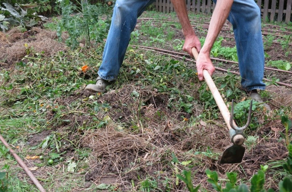 Quels sont les travaux de jardinage à faire en avril ?
