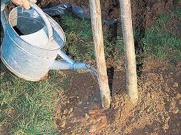 arroser arbre