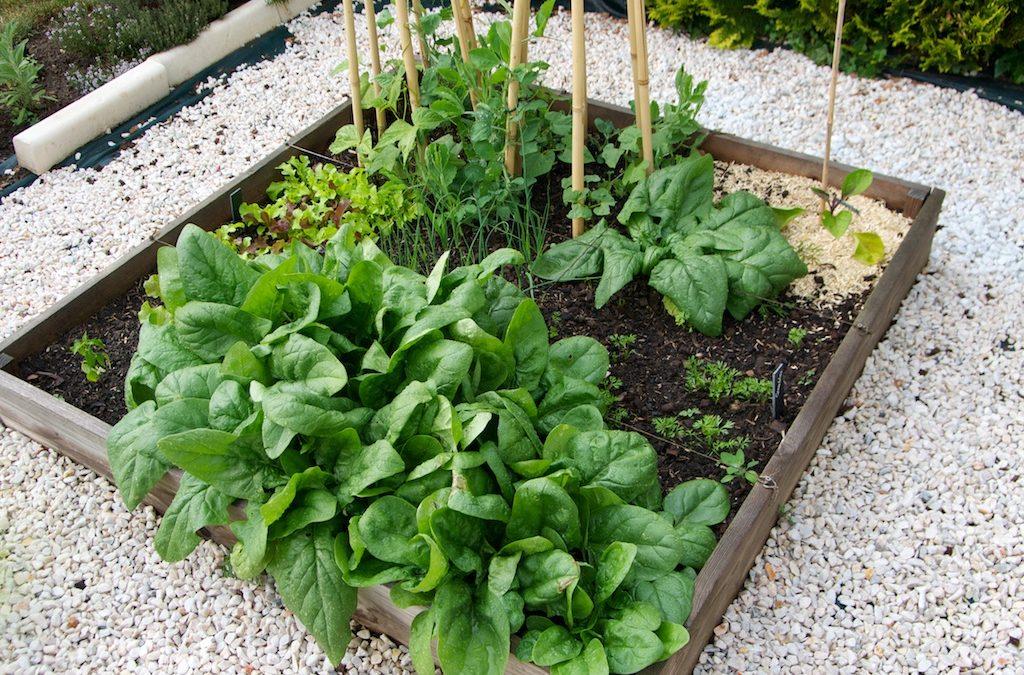 Quels sont les travaux de jardinage à faire au mois de mai ?