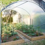 Comment cultiver des tomates sous serre ?