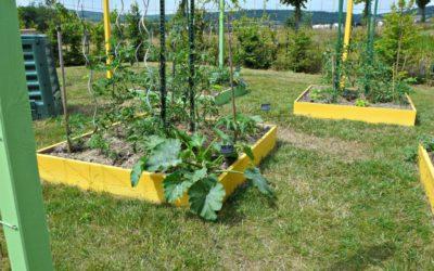 Quels sont les travaux de jardinage à faire au mois de juin ?