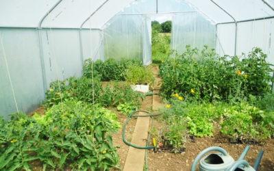 Pourquoi cultiver des légumes dans une serre de jardin?