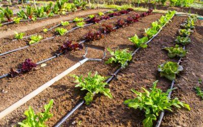 Quels sont les travaux de jardinage à faire au mois de juillet ?