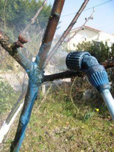 traitement cerisier jardin