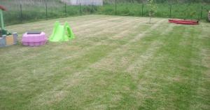 pelouse trop courte