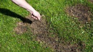 semer pelouse
