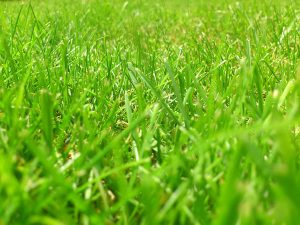 tonte herbe