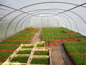 plantation serre