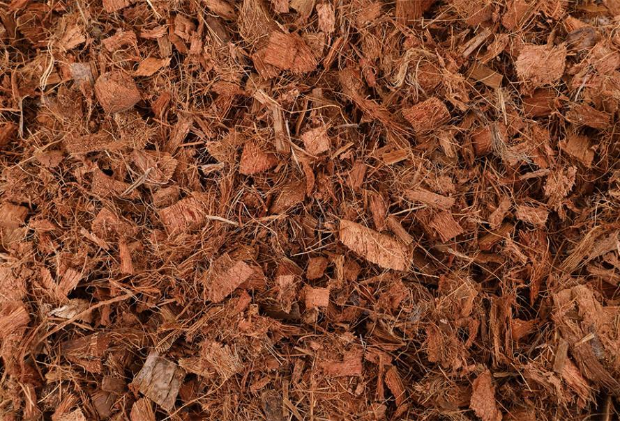 coque-coco-jardin