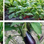 Quels sont les légumes à planter durant le printemps ?