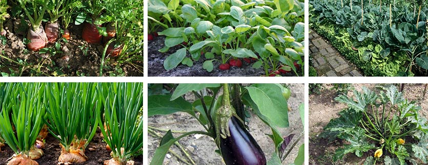 semer légumes printemps