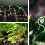 Comment éviter les maladies dans votre jardin ?